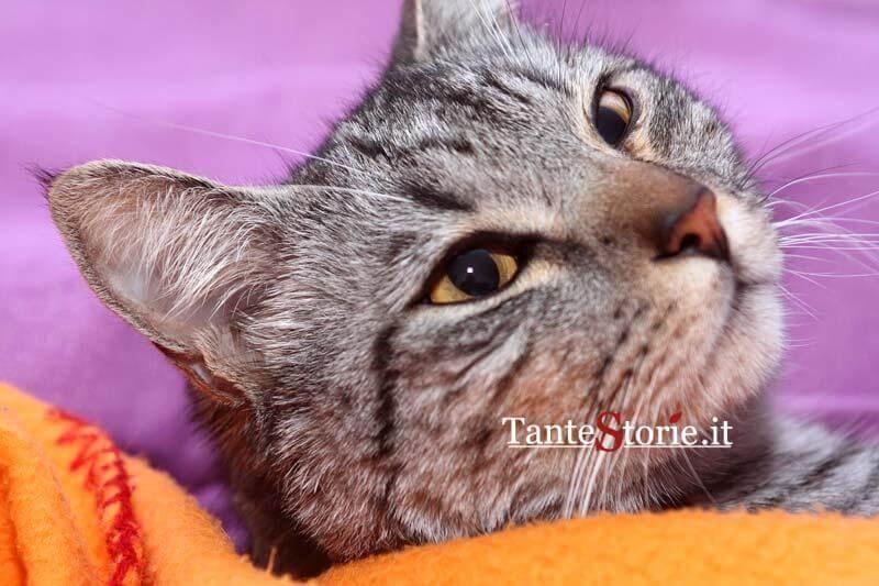 Il volto del gatto