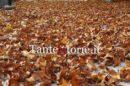L'autunno che scalda il cuore
